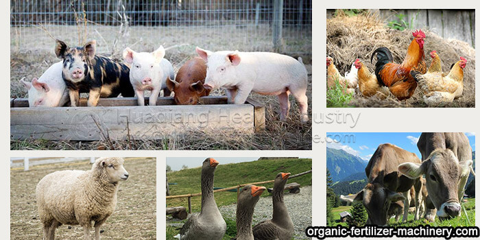 How to deal with manure in animal farm Animal-farm