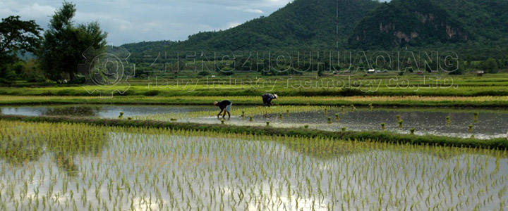 Effect of ratio of organic fertilizer equipment production on rice