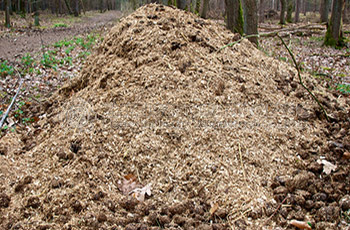 How to make chicken manure into organic fertilizer